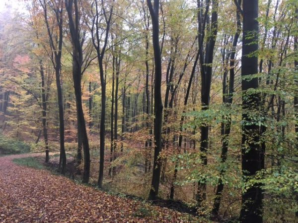 Yale Club of Germany Hike in the Taunus