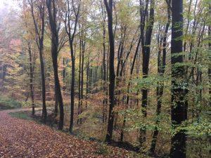 Yale Club of Germany Hike in the Taunus